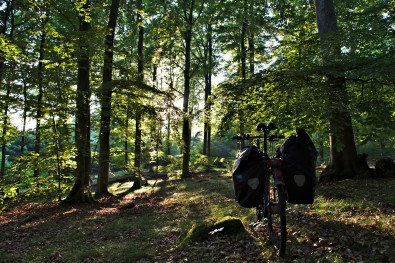 Ruegen Beech Forests